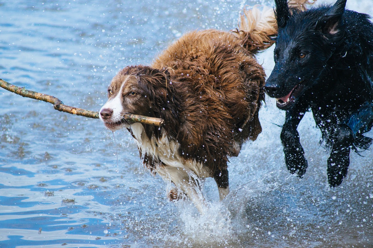 catalogo de razas de perros